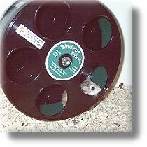 Robo Wheel- speziell für Roborowski Zwerghamster